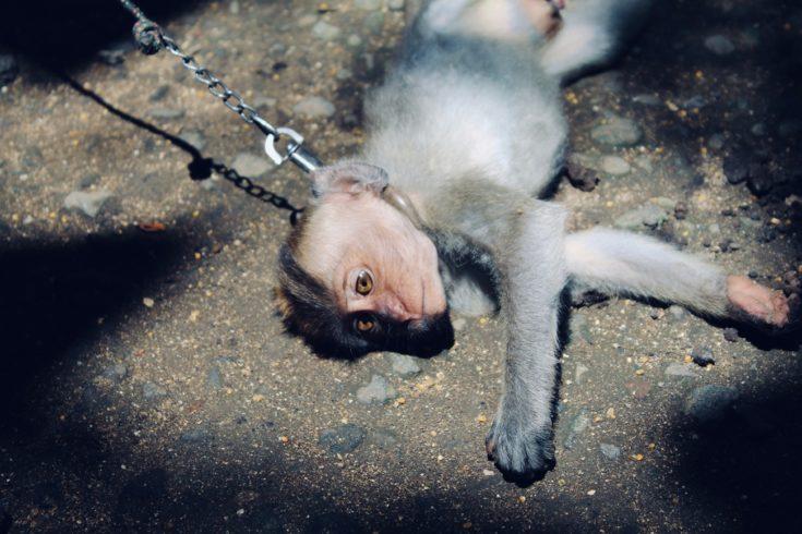 Nietestowane na zwierzętach. Dajesz się nabrać?